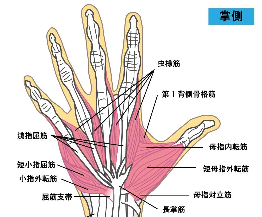 【体験談】肘の痛みが治らないときにおすすめのセルフマッサージ【僕の肘の内側が痛くなった原因は…】